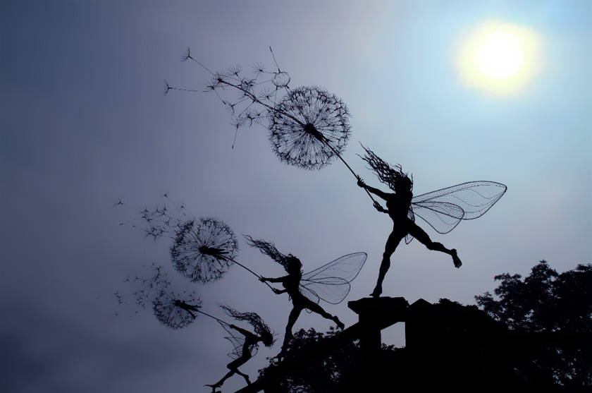 Dancing With The Dandelion