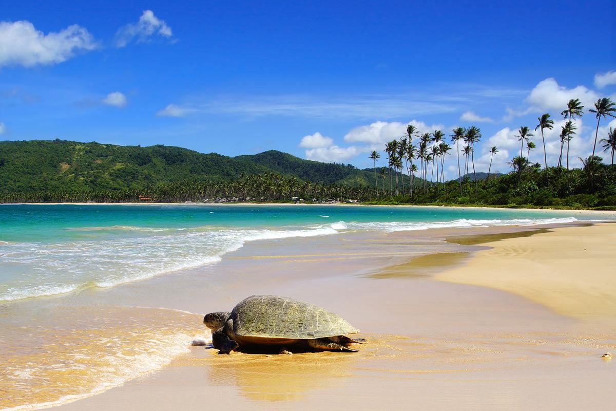 Nacpan Beach - Filipinler